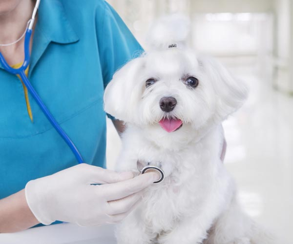 Health Care for Pets